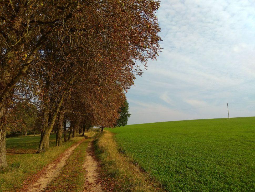 cesta u lesa